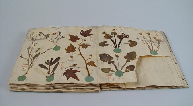 Séminaire sur l'enquête-collecte :  pratiques d'herborisation des premiers ethnologues professionnels (1925-1943)